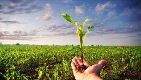 Psr 2014/2020, sostegno alle imprese agricole