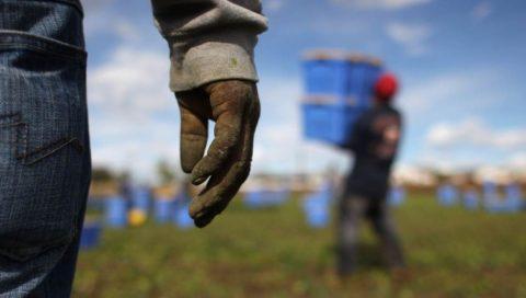 """Seminario: """"Il lavoro regolare in agricoltura e la Legge contro il Caporalato (L.119/2016)"""""""